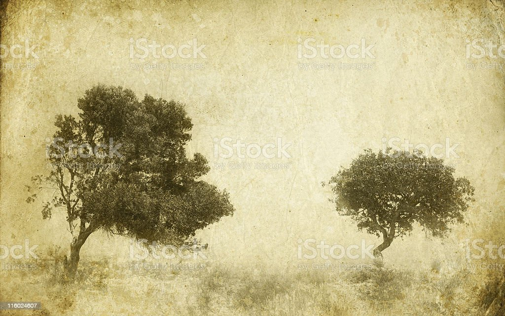 old photo of trees royalty-free stock photo