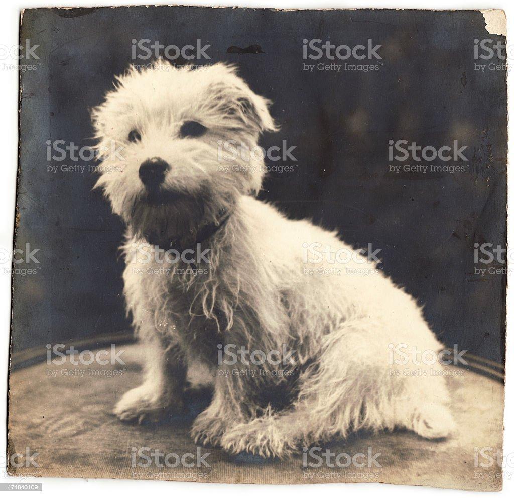 Vecchia foto di famiglia con cane (include clipping path) foto stock royalty-free