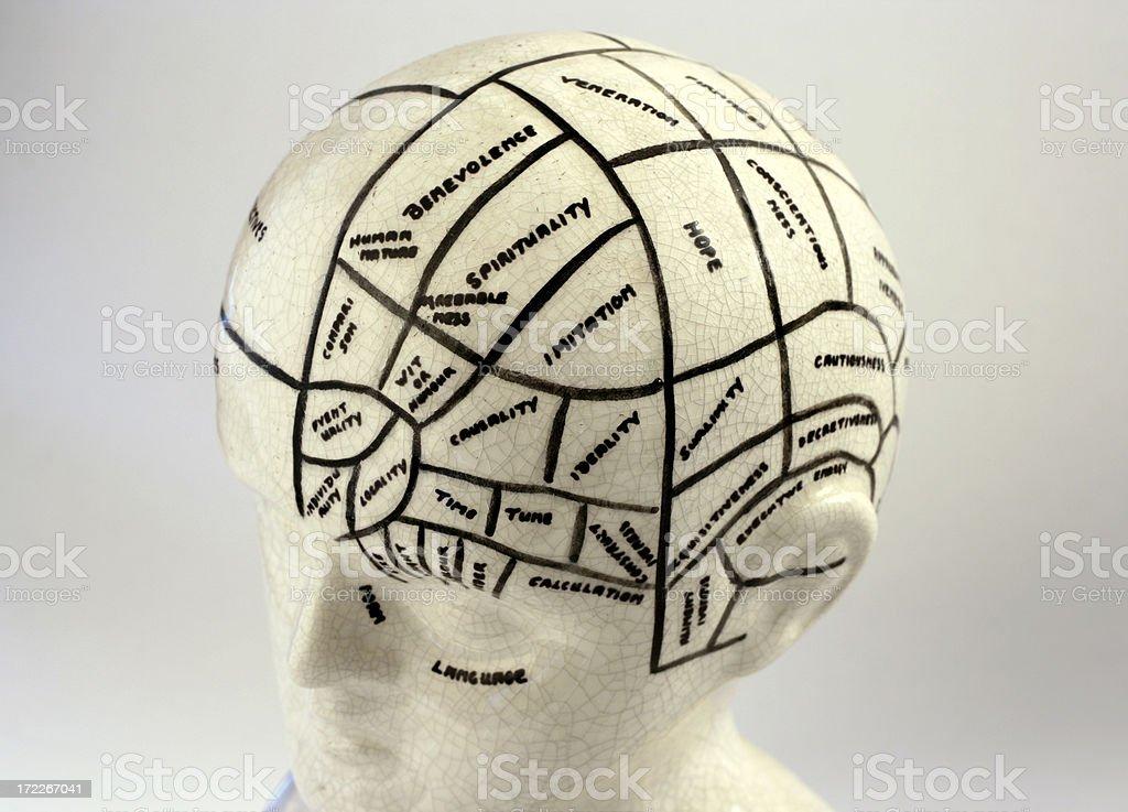 Old Phrenology Head stock photo