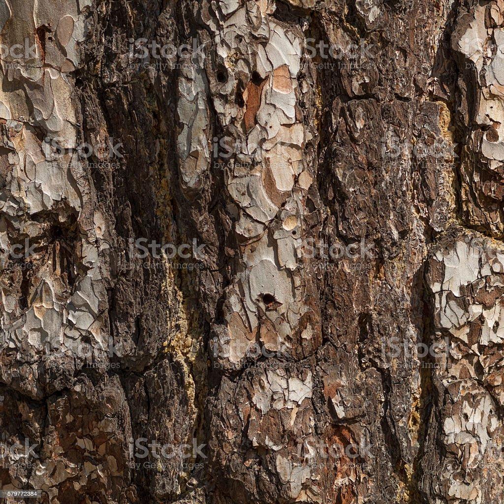 Old pine bark stock photo