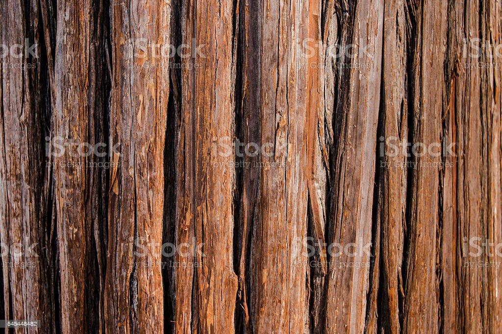 Old pine bark texture background stock photo