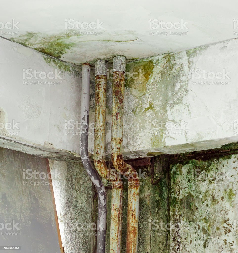 old pipe fungal mold wall stock photo