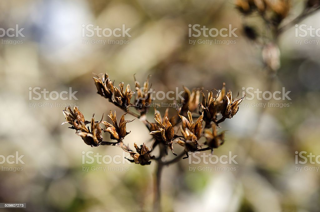 Old plant stock photo