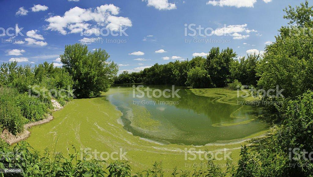 Old pond stock photo