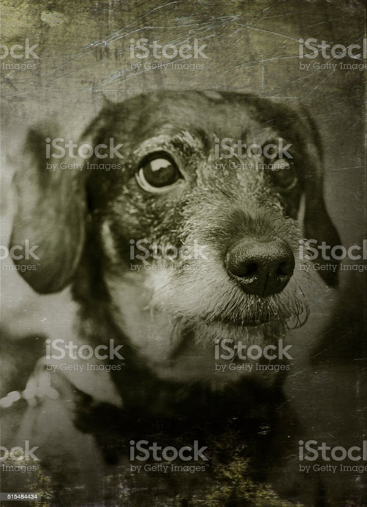 Old portrait of a cute dog stock photo