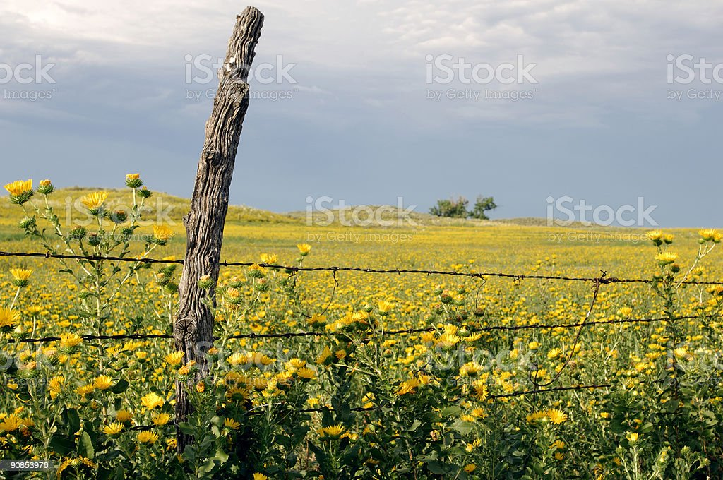 Old post, prairie flowers & fence stock photo