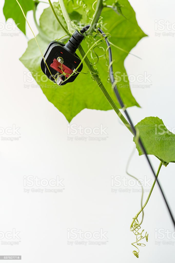 Old power plug and cable caught up creeper tendrils. stock photo