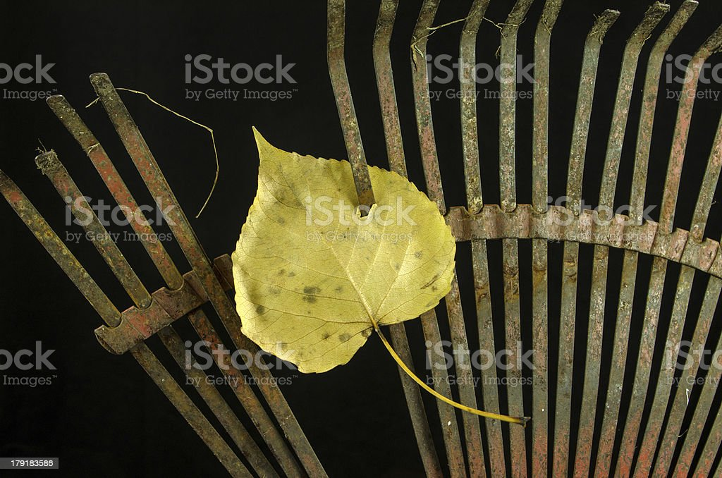 Old Rake and Leaf stock photo