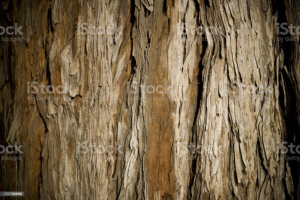 old redwood tree bark northern california royalty-free stock photo