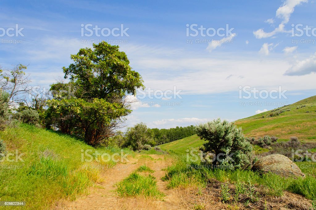 Old Road with Trees stock photo
