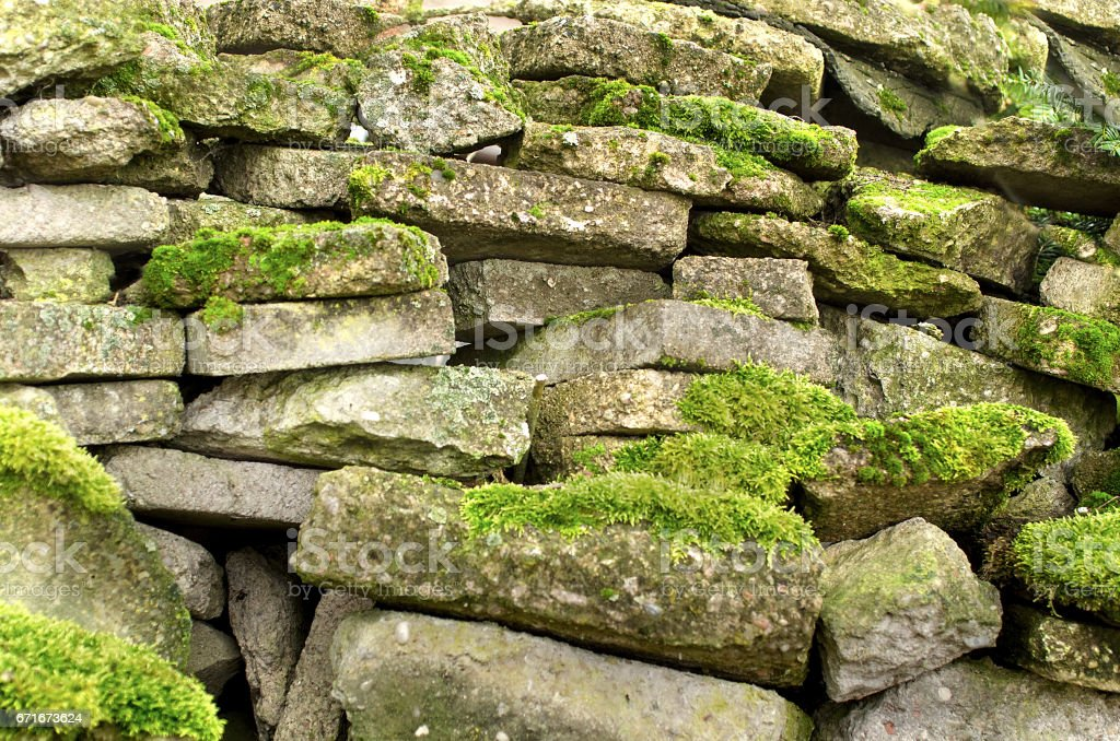 Old rocks with fresh green moss, natural texture background stock photo