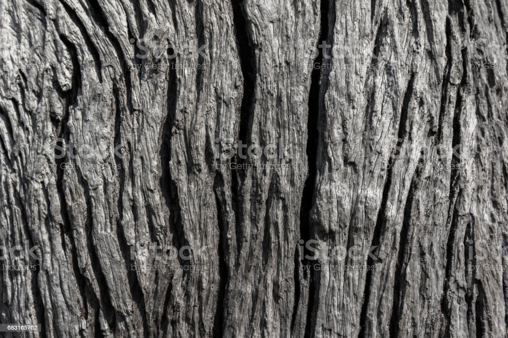 Old rough wood texture. Wooden texture. Wooden background. Tree texture. Tree background. Crack tree texture. Old tree texture. Old tree background. Exotic tree texture. Nature texture background. stock photo