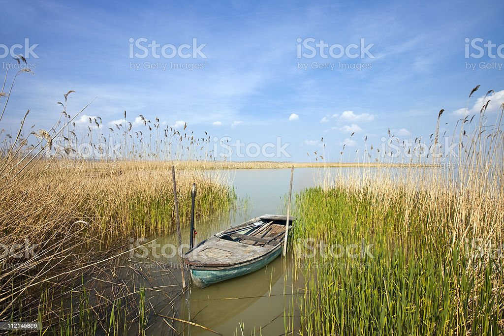 old rowing boat among the reeds stock photo