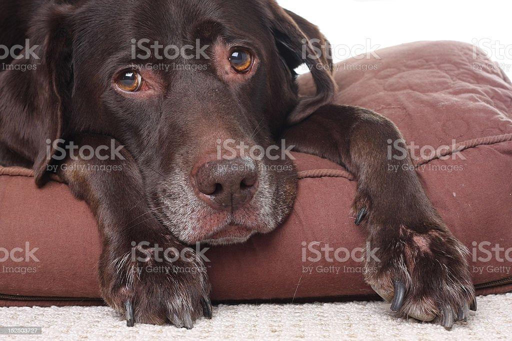 Old sad dog stock photo