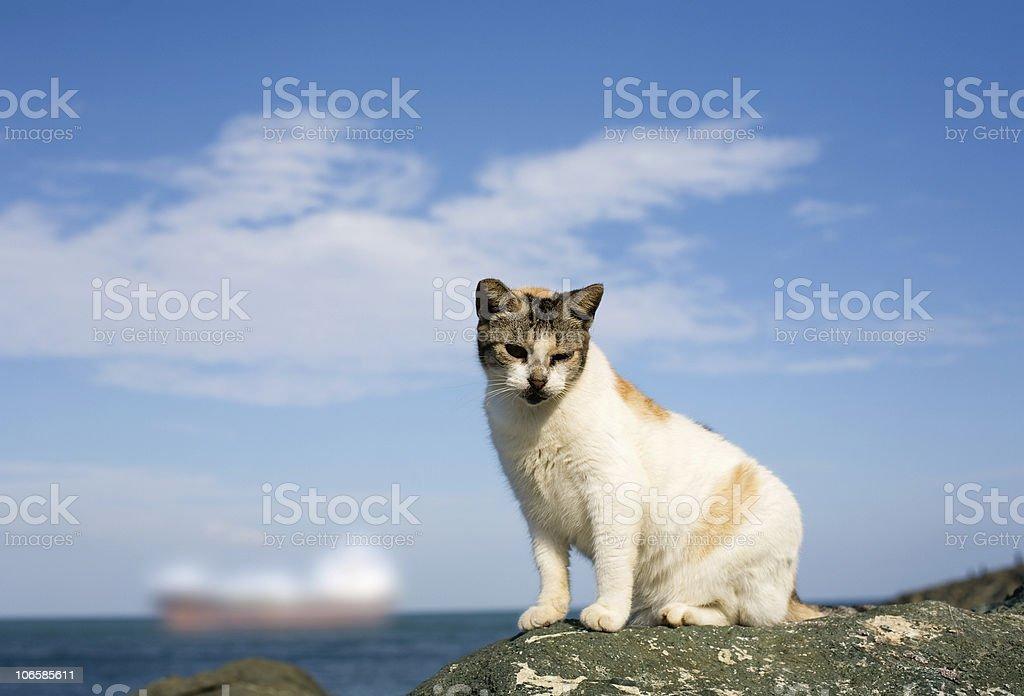 Old san Juan-stray cat stock photo