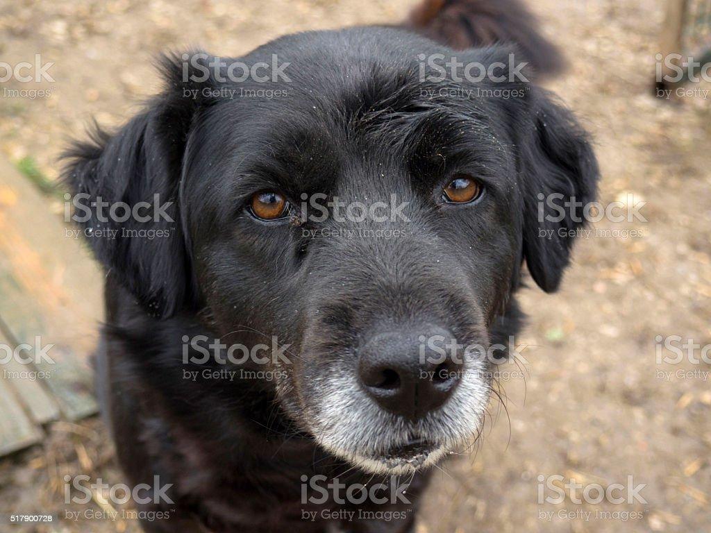 Old senior dog abandoned, sad eyes stock photo