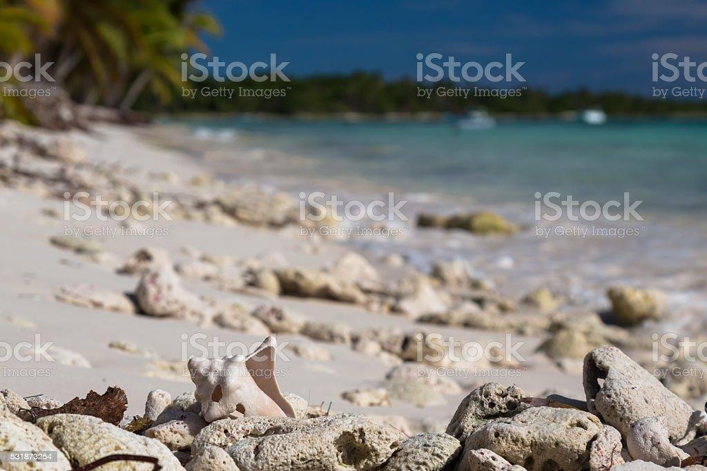 Old shell on sandy coral beach, Saona stock photo
