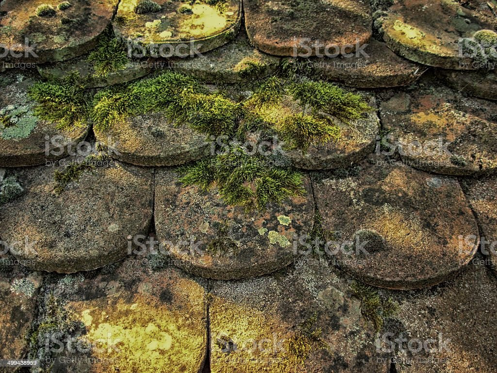 Old sherd y stock photo