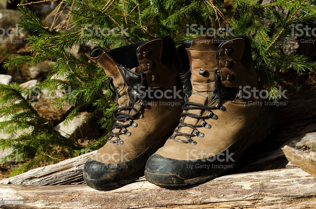 Old shoes in a wood stock photo