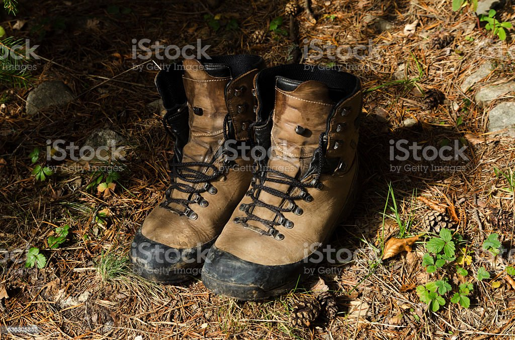 Old shoes on a pine needles stock photo