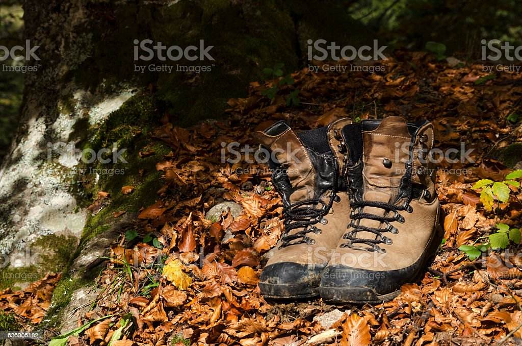 Old shoes under a tree in a wood stock photo