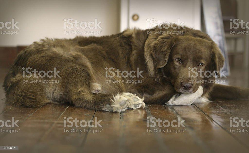 old shop dog stock photo