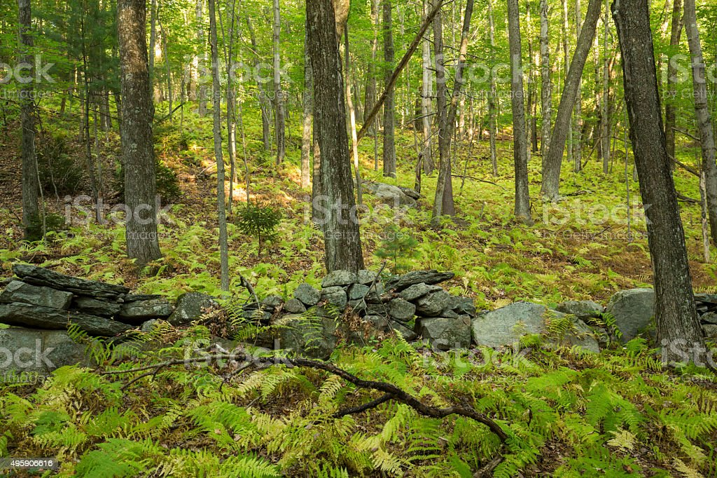 Old stone wall in open woodland of central Connecticut. stock photo