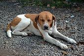 Old stray dog Sleeping on ground