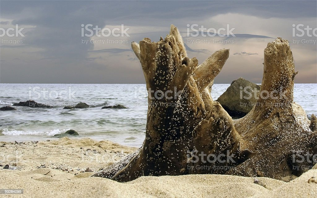 Old Stump at seashore royalty-free stock photo