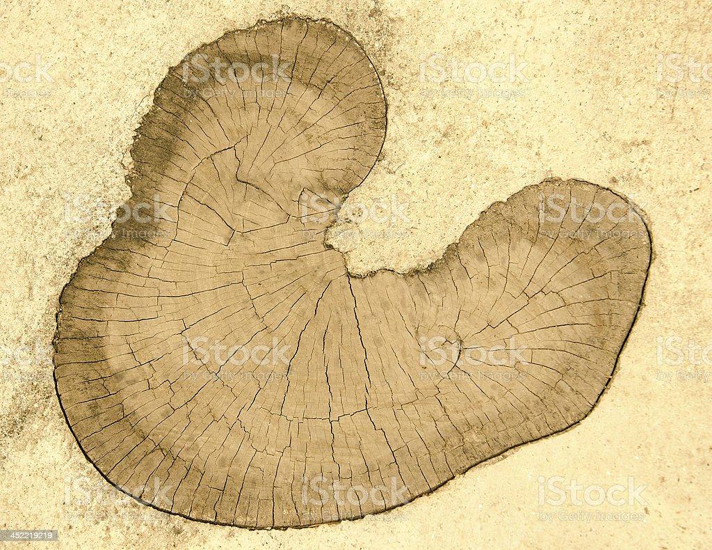 Old stump on floor ground royalty-free stock photo