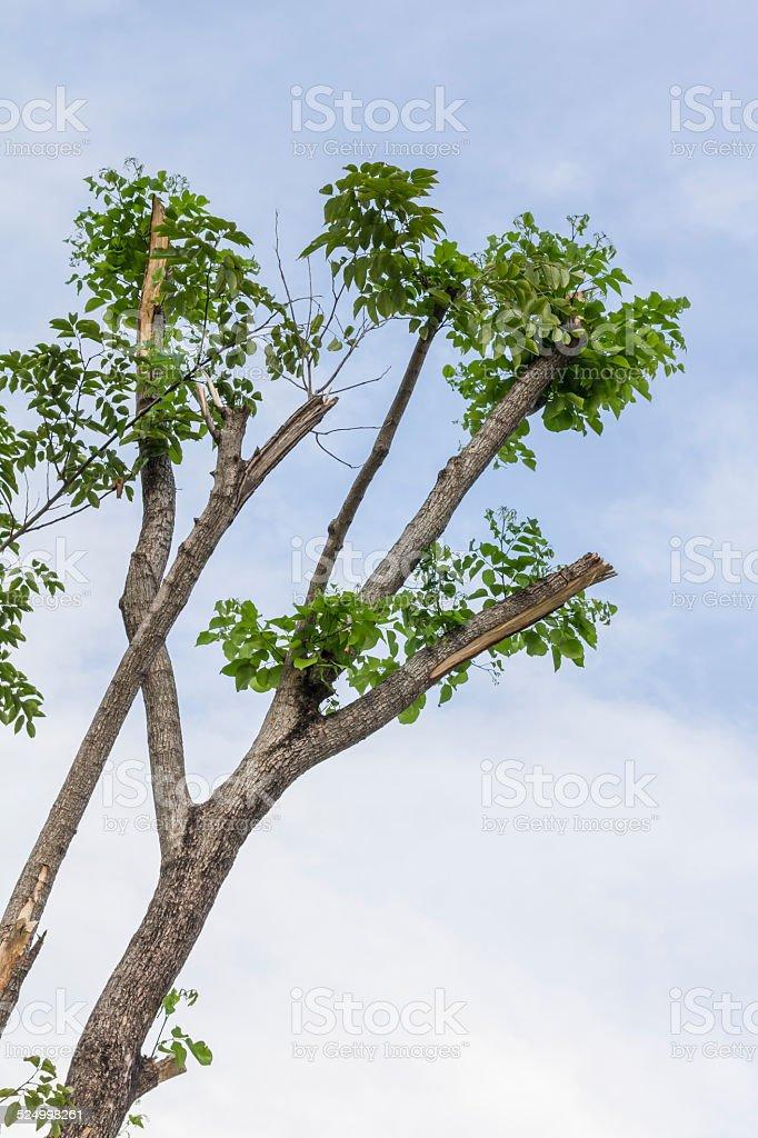 Alte große Baum mit blauem Himmel Lizenzfreies stock-foto