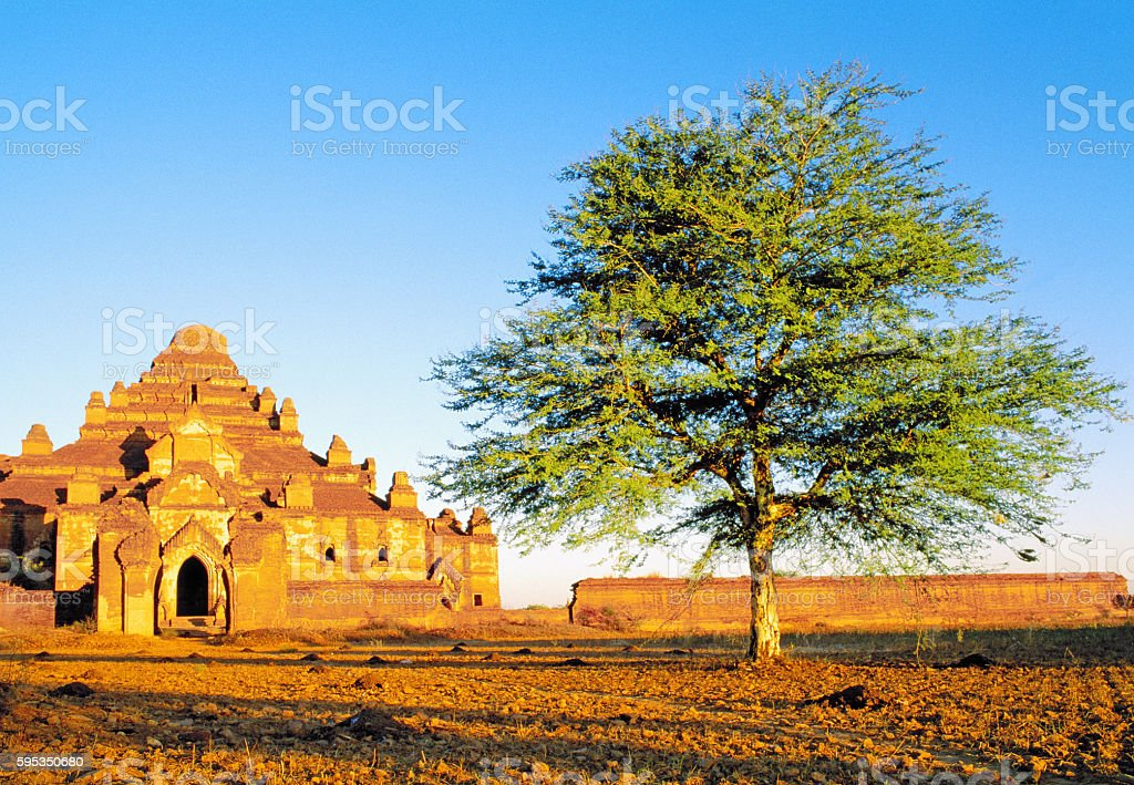 Old Temple and a Tree, Bagan, Myanmar stock photo