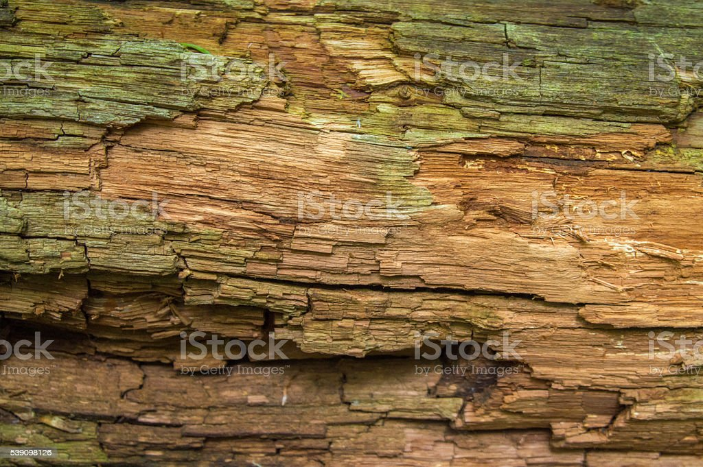 Old textured wood background stock photo