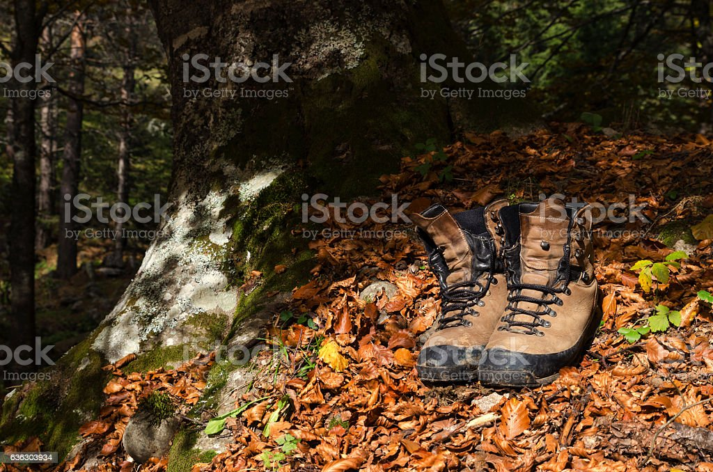 Old touristic shoes on a autumn leaves in a wood stock photo