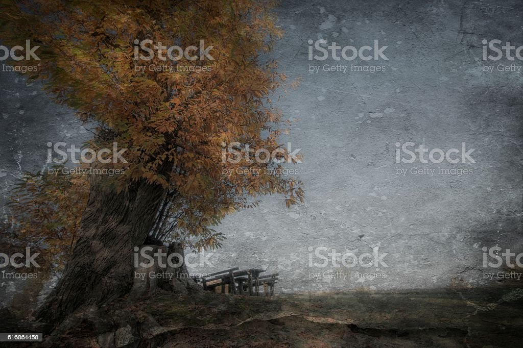 Old tree and bench stock photo