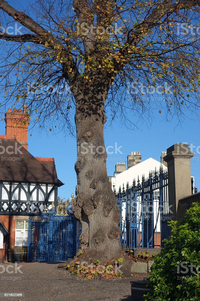 Old tree and gates stock photo