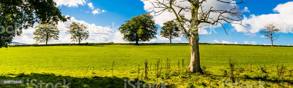 Old Tree And Young Trees stock photo