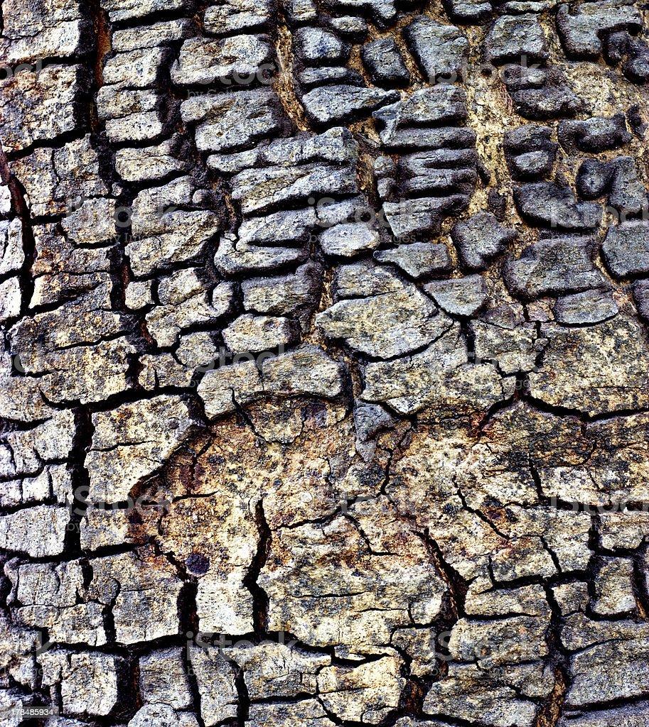 old tree bark texture royalty-free stock photo