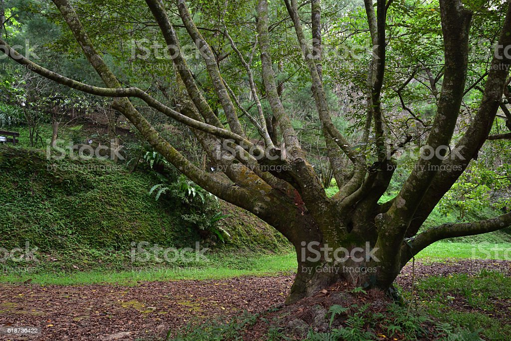 Old tree beside footpath at mountain range stock photo