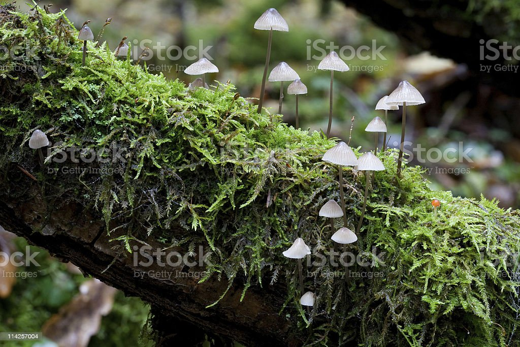 Old tree branch moss wrapped with fungus stock photo