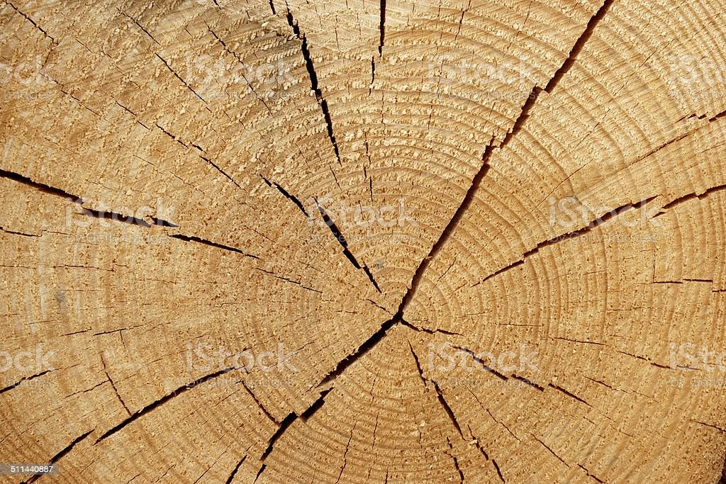 Old Tree Cross Section stock photo