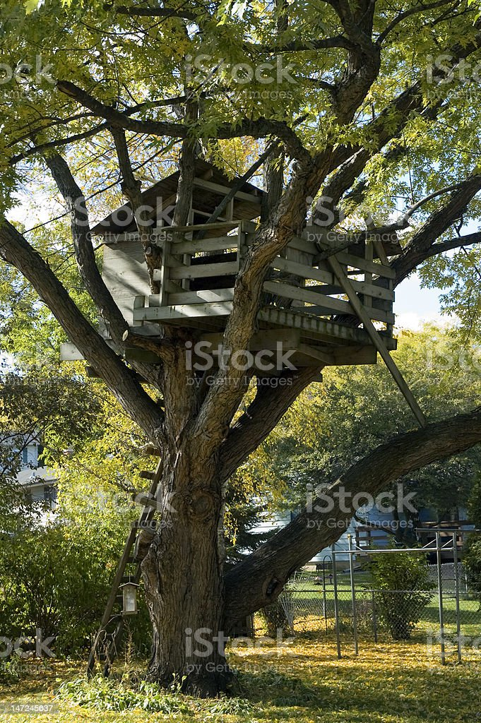 Old Tree House stock photo