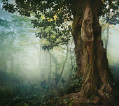 Old tree in misty forest