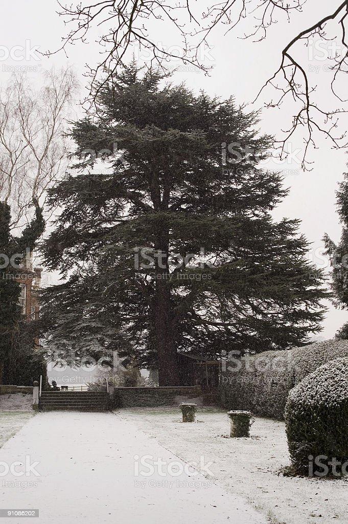 Old tree in snowy, wintery scene 1 stock photo