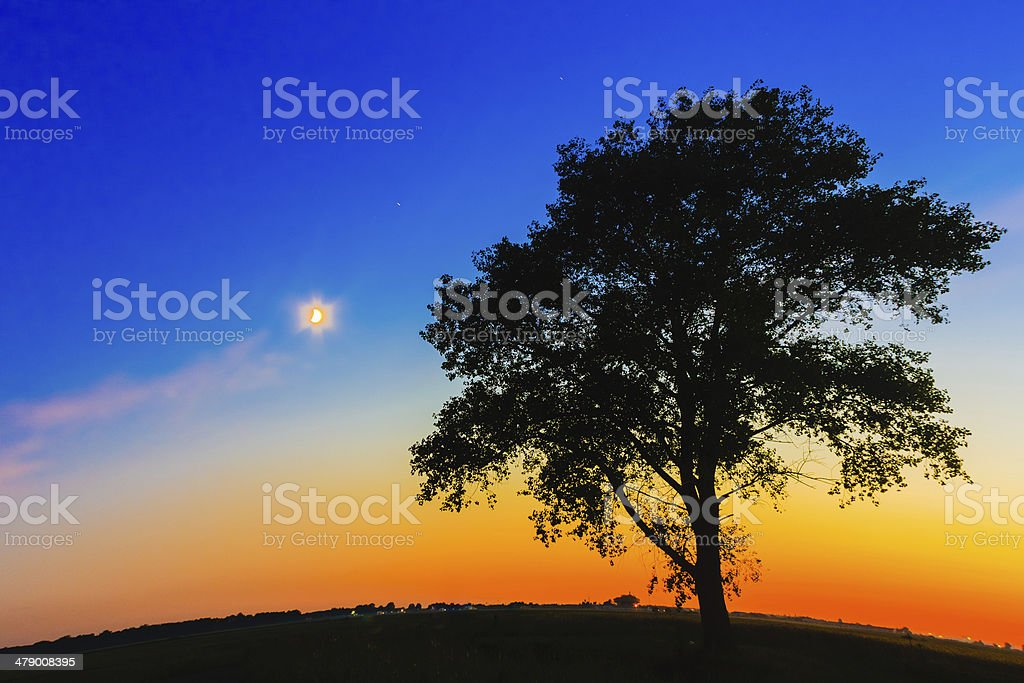 Old Tree In Sunset royalty-free stock photo