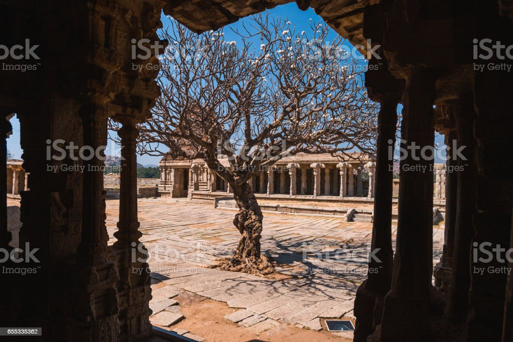 Old tree in the courtyard of Vittala temple ancient ruins in Hampi, Karnataka, India stock photo
