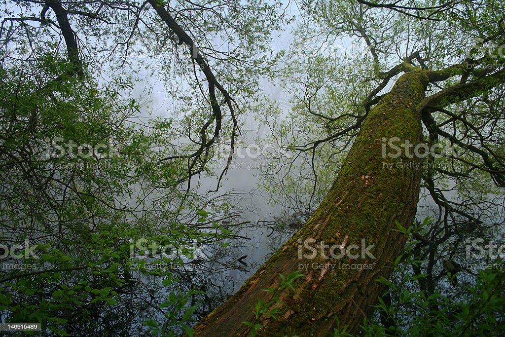 늙음 나무 물 royalty-free 스톡 사진