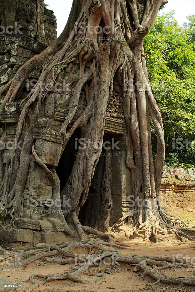 Old tree on gate stock photo