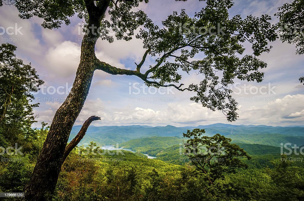 old tree overlooking mountains royalty-free stock photo