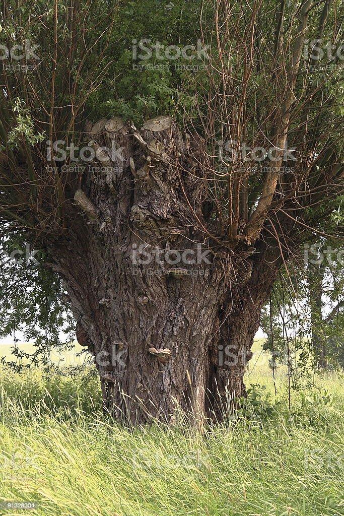 alter Baum stock photo